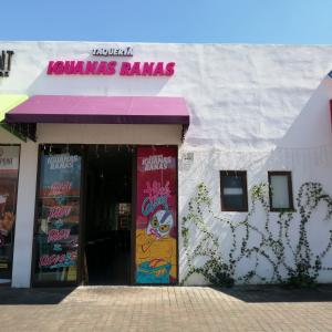 Foto de Iguanas Ranas (Dinamia Cayala)
